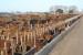 Foto Nota -ventajas del Limousin en feedlot-